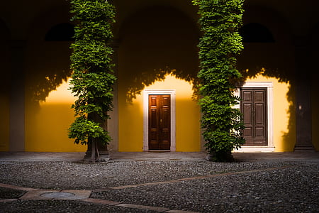 two closed door with tree infront