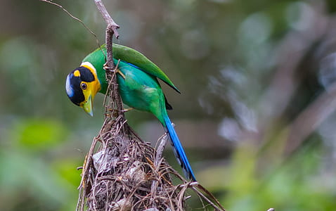 green and blue bird on brown plant