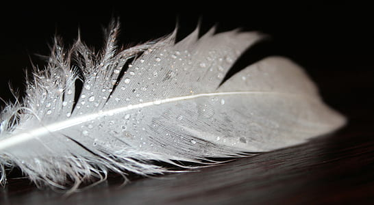 shallow photography of white feather