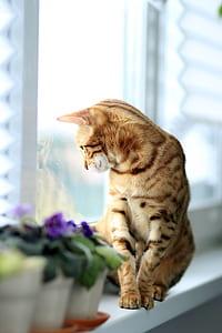 orange cat sitting on white wooden shelf near glass window seeing outside