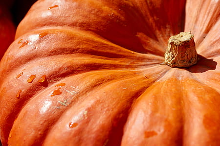 orange pumpkin in closeup photography