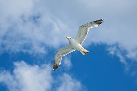 low angle photography of white seagull flying under white clouds during daytime