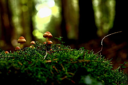 close up photography of brown mushrooms