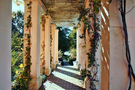 photo of white concrete columns with vines
