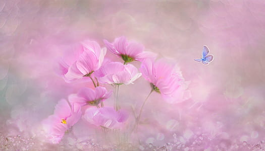 pink cosmos flowers painting