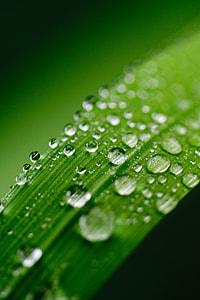 macro shot of water on leaves