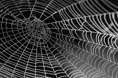 cobweb closeup photography