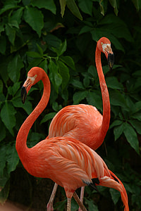 two red Flamingos near green leaf plant