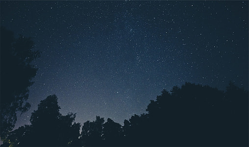 tress under night sky