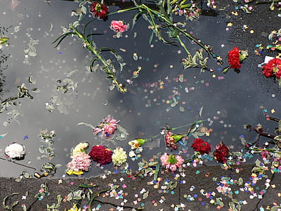 assorted-color flowers floating on river during daytime