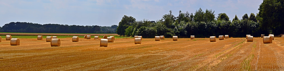 photo of hay bales