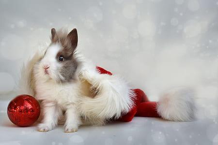 white and brown rabbit photo