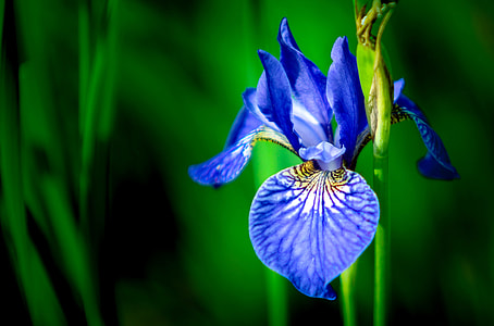 selective focus photo of blue petaled flower in bloom