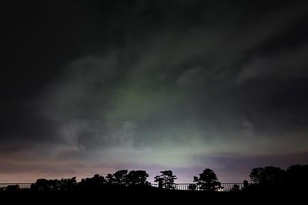tree underneath Northern lights