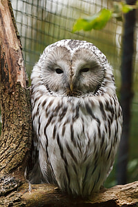 shallow focus of white and gray owl