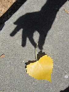 yellow leaf on concrete pavement