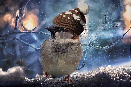 white bird wearing brown knit hat