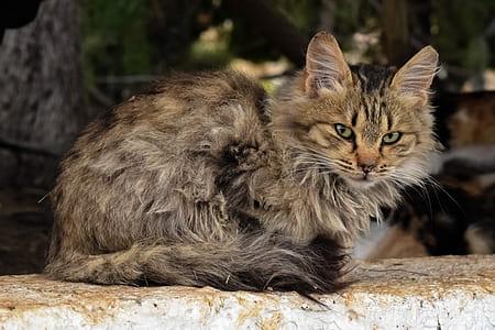brown fur cat on gray concrete board