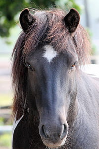 selective focus photography of black horse