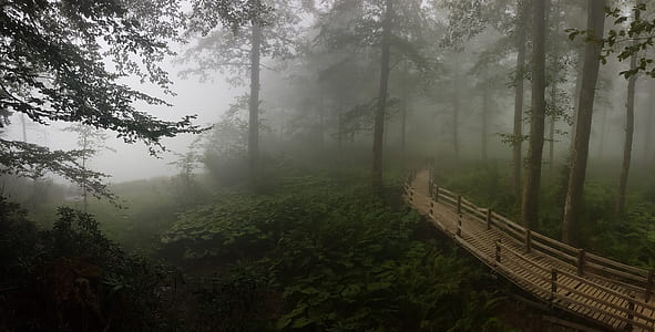 brown wooden bridge in the middle of forest during foggy day
