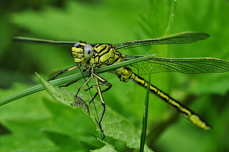 macro photo of dragonfly