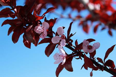 Pink Flowers on Tree Braches