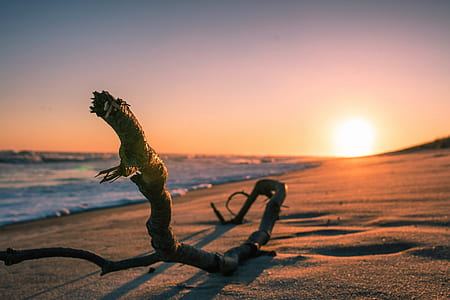 brown tree root on seaside during sunset