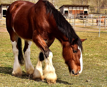 brown and white horse on field during daytime