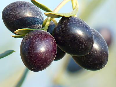 round purple fruits