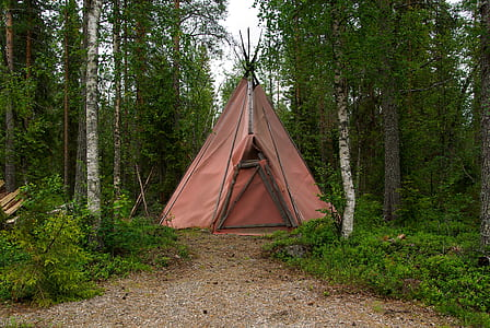 pink teepee tent between brown and grey trees at daytime