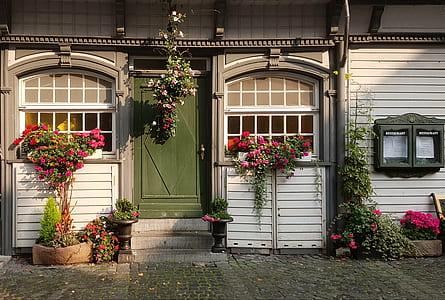flowering plants near window
