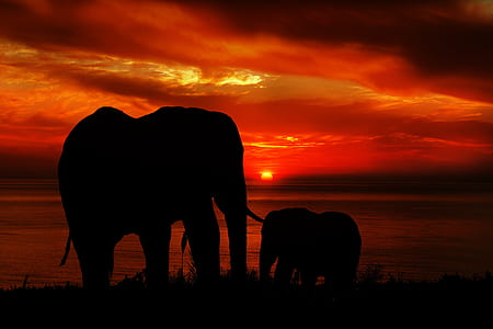 silhouette of two elephants during sunset