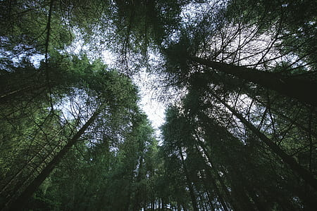 worm's eye view of forest