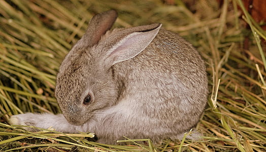 photo of brown rabbit