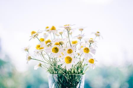 shallow focus of white daisies