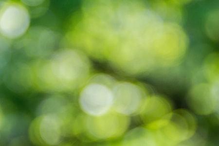 green, bokeh, defocused, nature