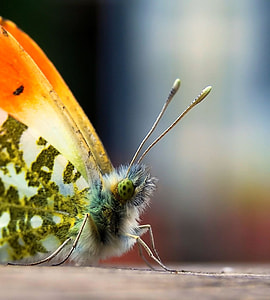 macro photo of green and orange butterfly