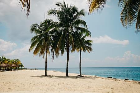 three palm tree near seashore
