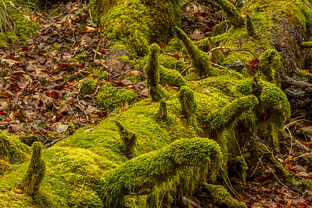 photo of tree branch full of moss