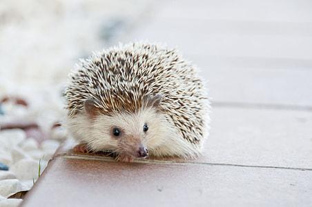 brown hedgehog on brown surface