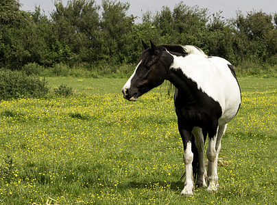 white and black horse on grass