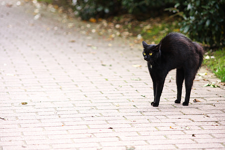 black cat on concrete pavement
