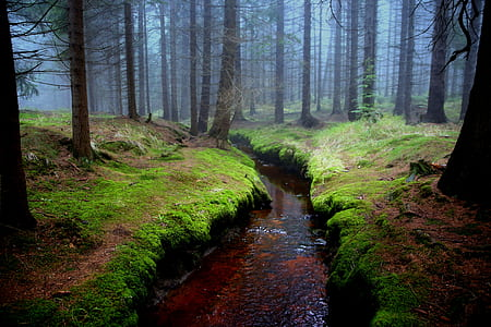 stream on forest at daytime