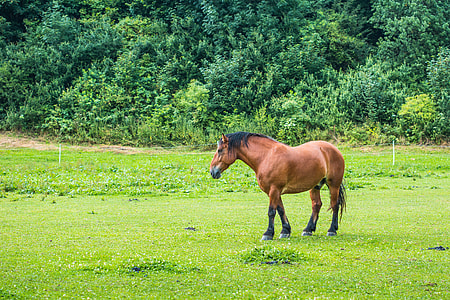 Brown Horse in a Meadow