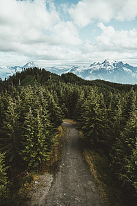 rough road between the green pine trees