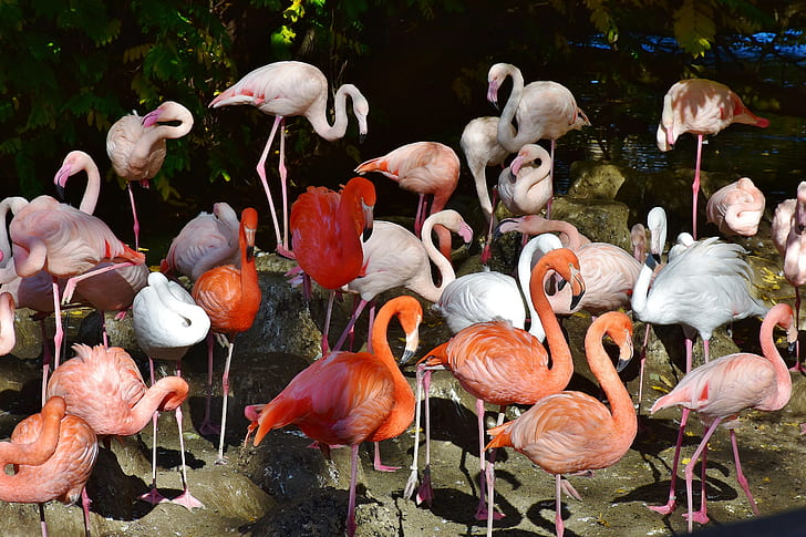 flock of orange and white flamingos