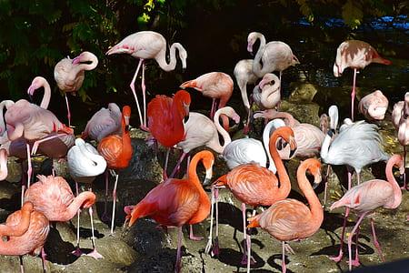 flock of orange and white flamingos