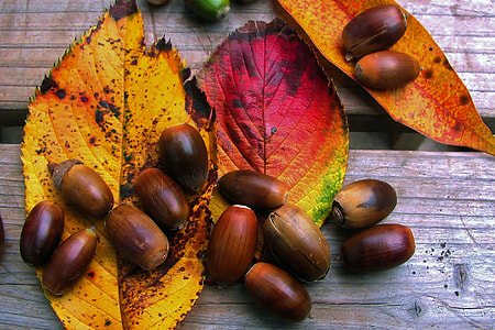 Closeup shot of Autumn leaves and acorns
