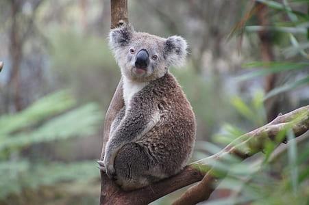 brown and white koala on tree