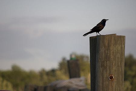 black crown on brown log